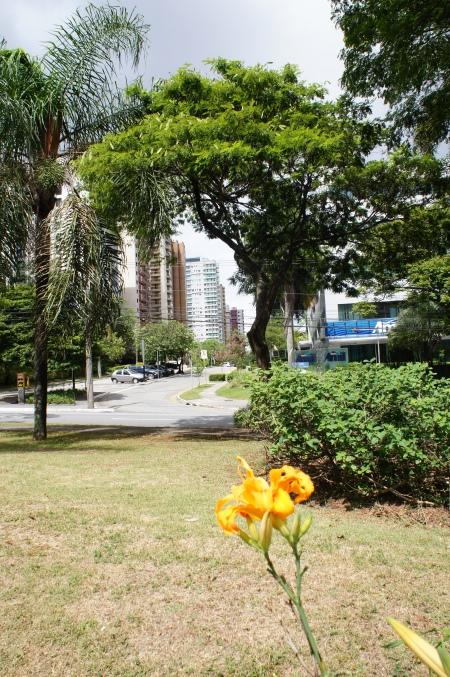 Alameda Cauaxi em Alphaville Barueri São Paulo - Foto de Júnior Holanda 2014